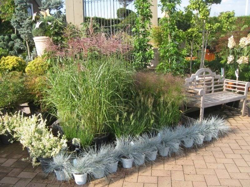 graser pflanzen dekorativ