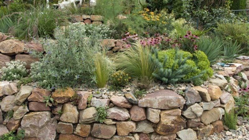 graser pflanzen steingarten