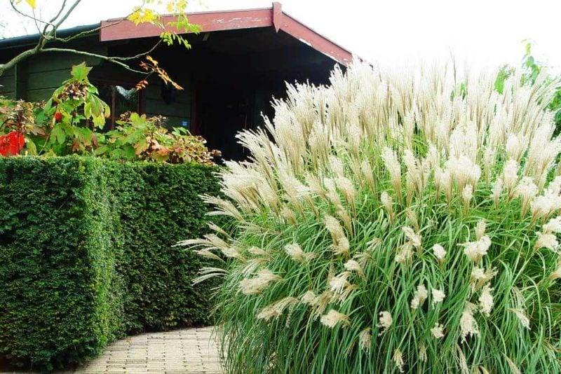 graser pflanzen groß