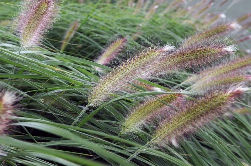 graser pflanzen pflegeleicht