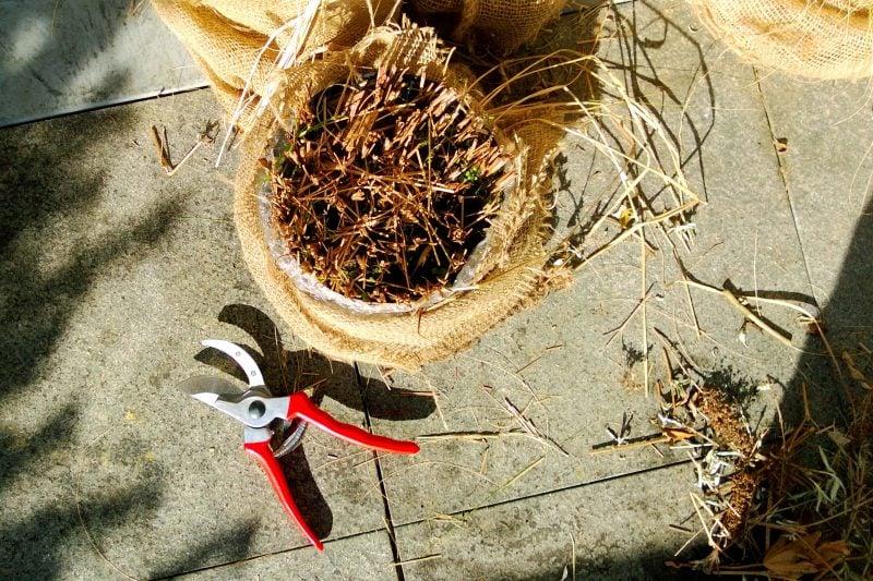 graser pflanzen gepflegt