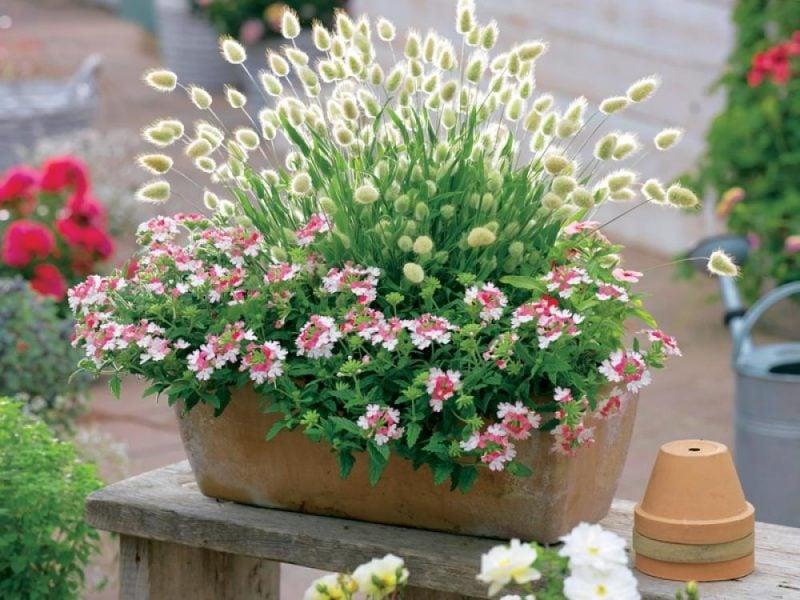 graser pflanzen klein