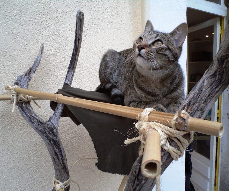 Katzenmöbel Naturbaum