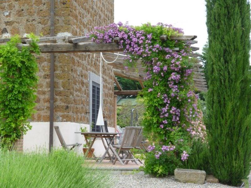 Kletterrosen Pflanzen im Garden