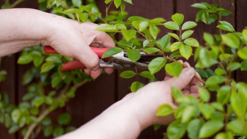 kletterrosen pflanzen: pflegetipps für traumhaften garten - garten, Terrassen ideen