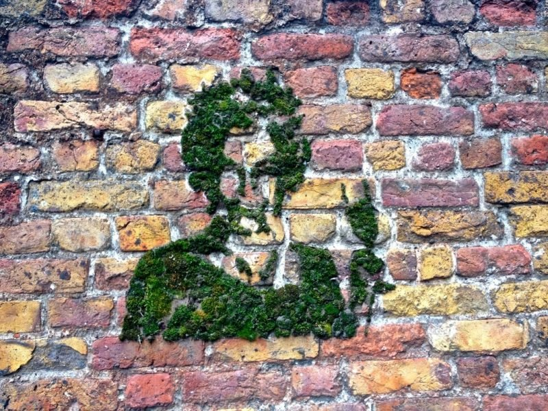 Moos Graffiti auf Stein