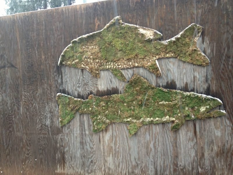 Moos Graffiti Fische