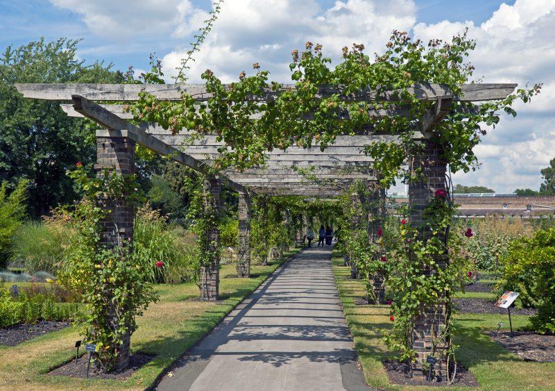 Pergolen mit Pflanzen