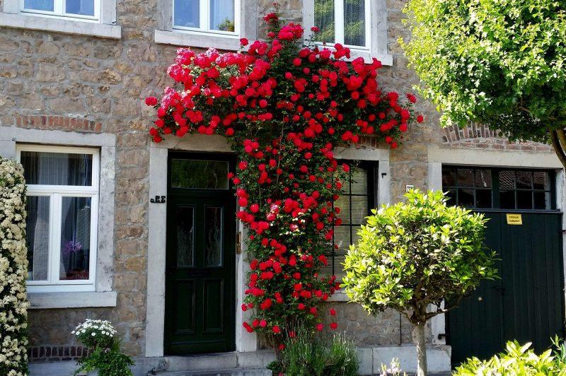 Rosenarten rote Kletterrosen