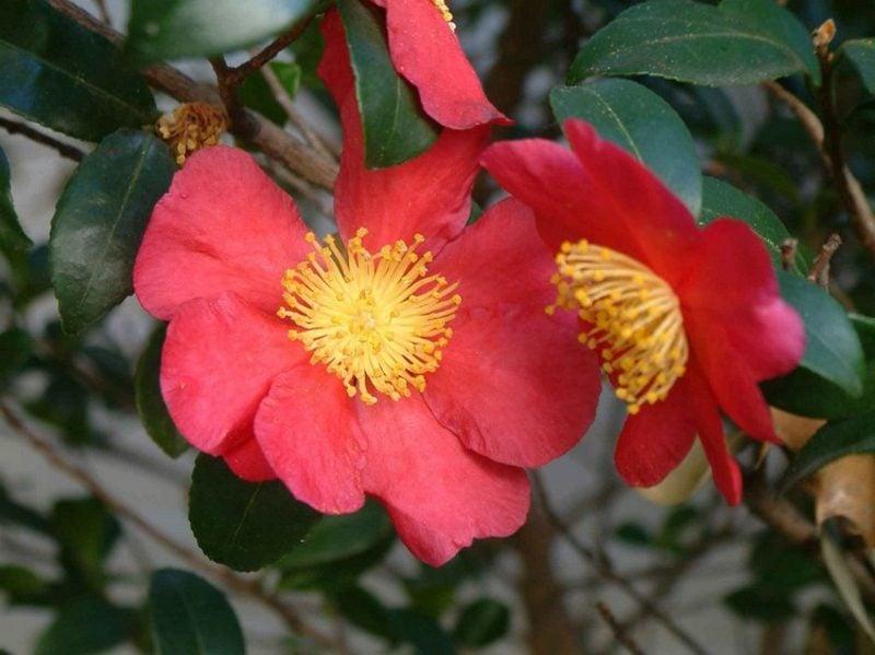 Feng Shui Garten Pflanzenarten