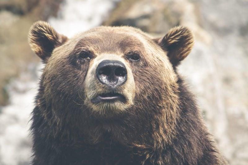 Symbol für Stärke Bär