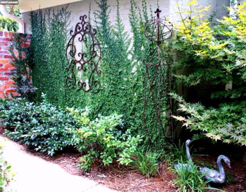 winterharte balkonpflanzen passend