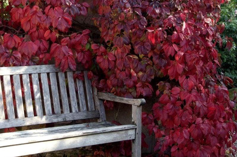 winterharte balkonpflanzen rot