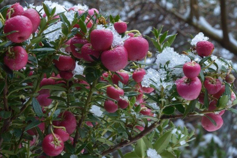winterharte balkonpflanzen stark