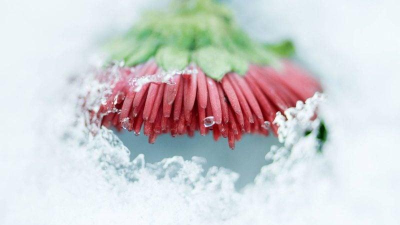 winterharte balkonpflanzen ausstehend