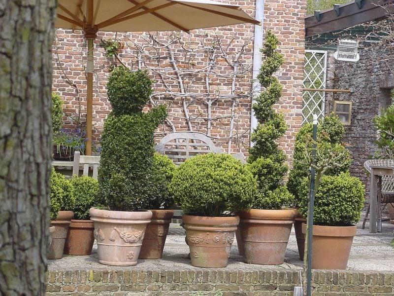 winterharte balkonpflanzen grün