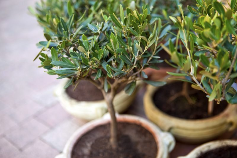 winterharte balkonpflanzen interessant
