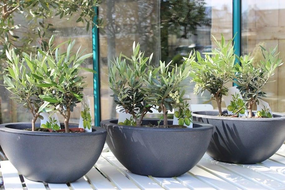 winterharte-balkonpflanze-4.jpg
