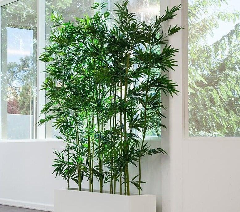 Tropisches feeling mit zimmerbambus pflege tipps garten - Bambus pflegen zimmer ...
