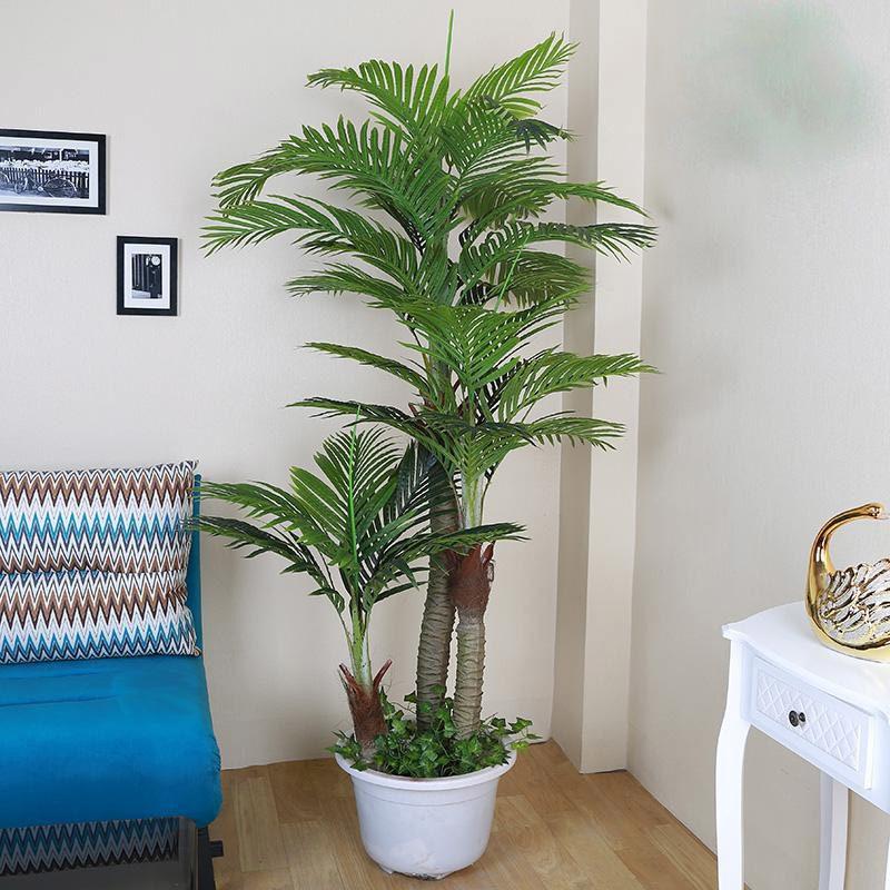 Zimmerpalme Bambus Arten