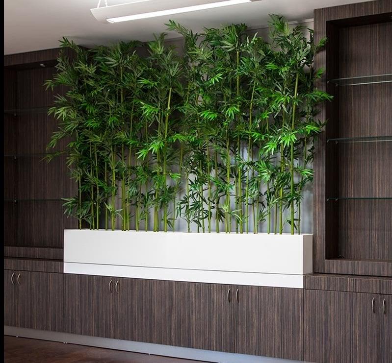 Zimmerpalme Bambus