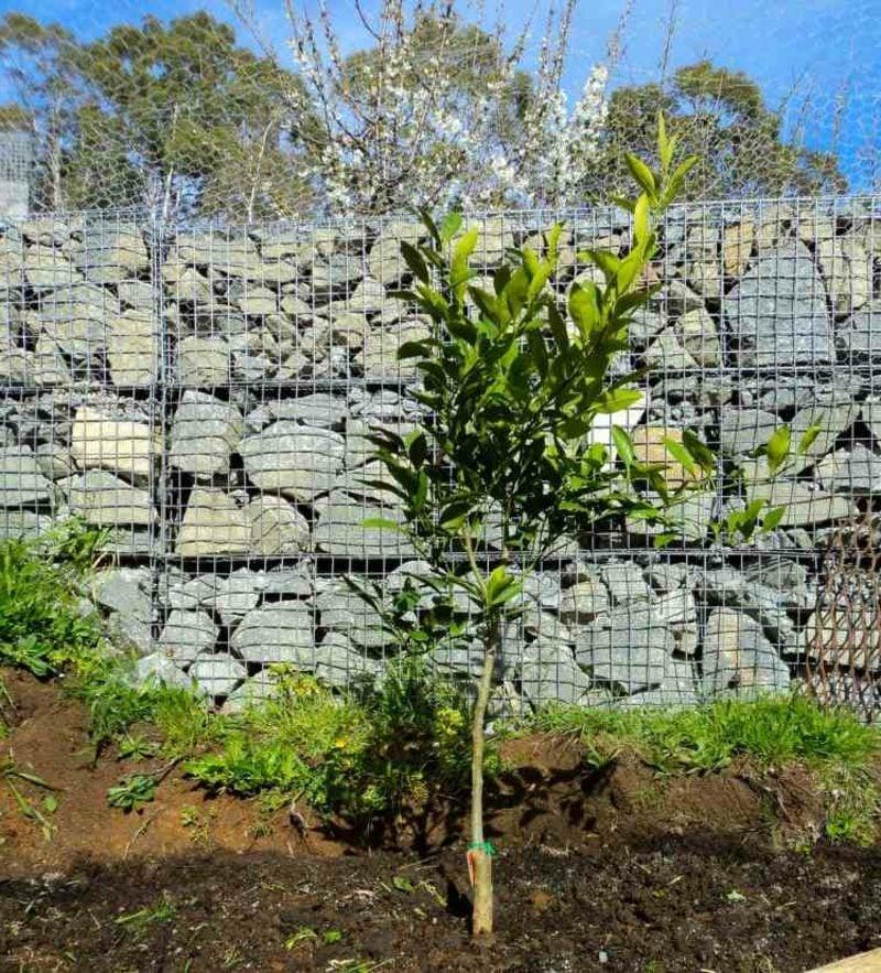 Gabionenwand Stein originelle Gartengestaltung