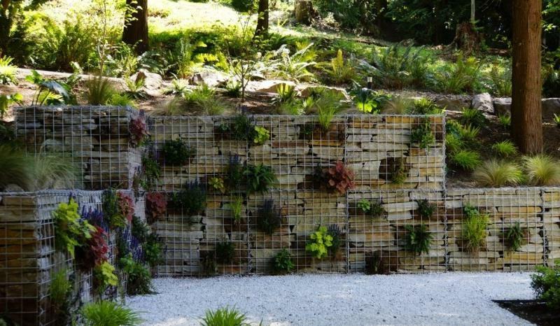 Gabionenwand bepflanzt