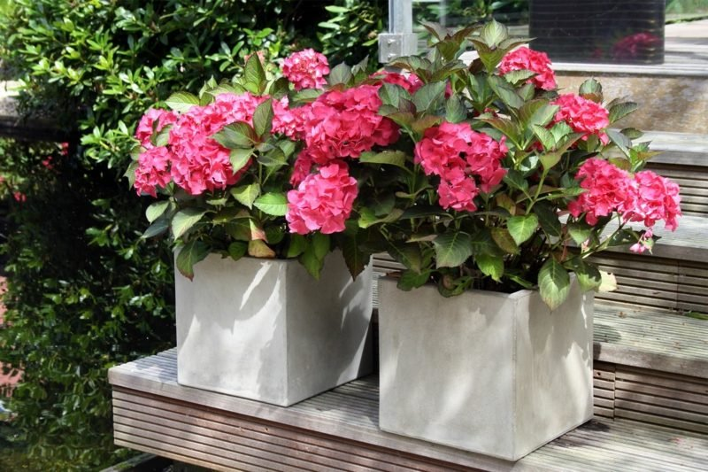 Blumenkübel Beton Quadratform
