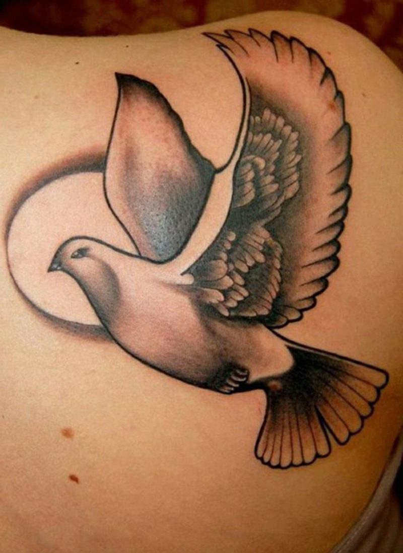 tauben tattoo dove