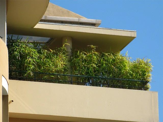 bambus im kübel auf dem balkon