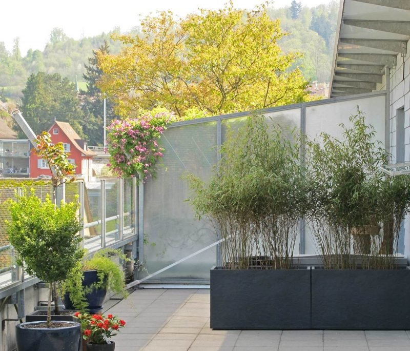 kann ich bambus im k bel halten balkon haus garten zenideen. Black Bedroom Furniture Sets. Home Design Ideas