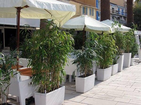 bambus im kübel im restaurant