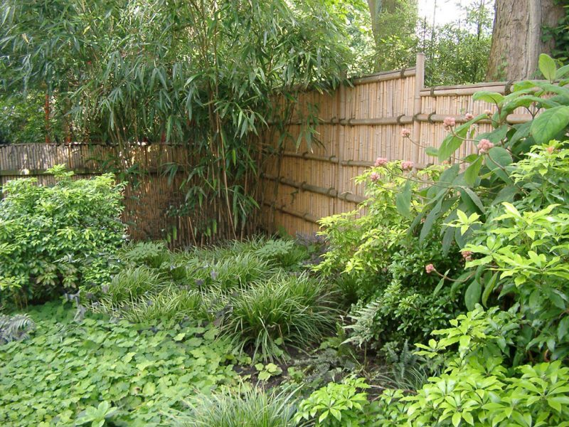 bambus im kübel im garten