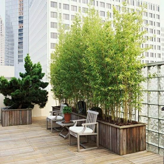 bambus im kübel auf balkon