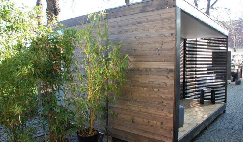 bambus im kübel super