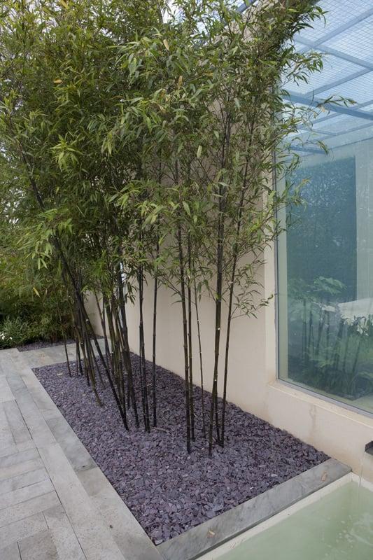 bambus im kübel kaufen
