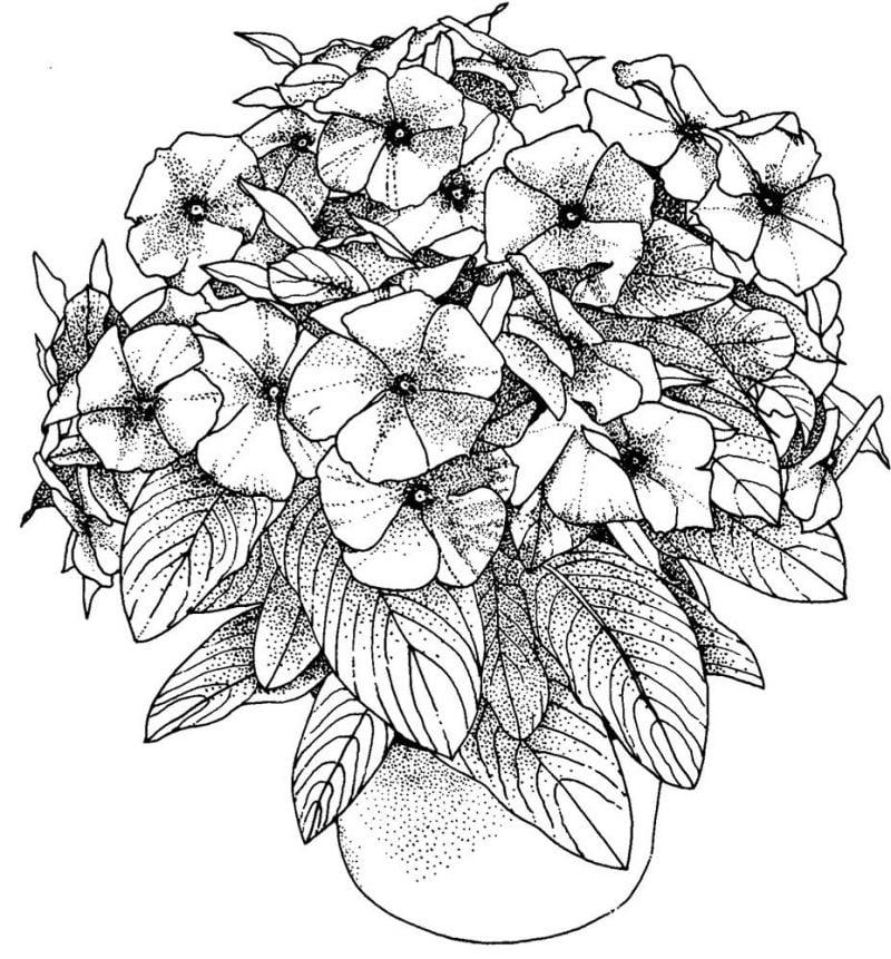 Blumen Bilder zum Ausmalen kostenlos