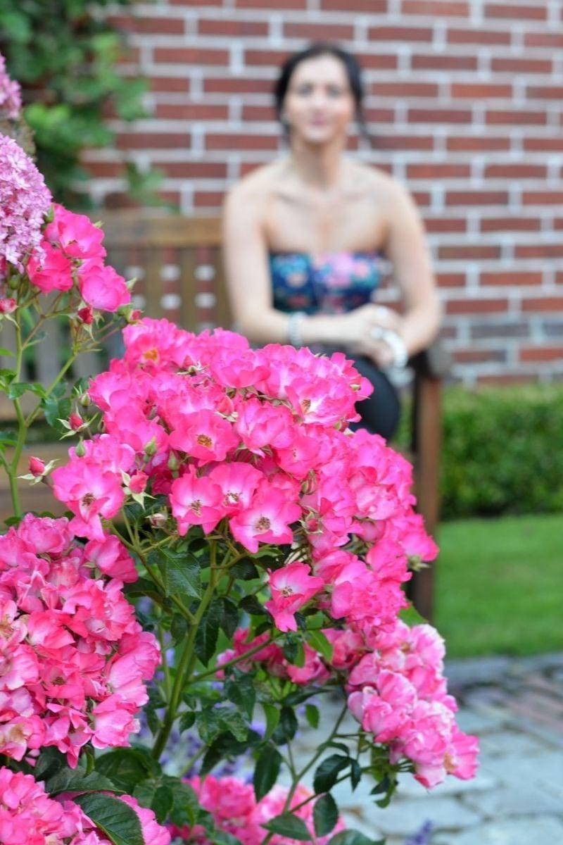 Sommergrüne Sträucher Gartenstraucher Sommergrün