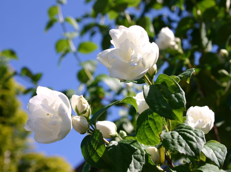 gartensträucher: 13 bezaubernde arten und pflegehinweise - garten, Gartenarbeit ideen
