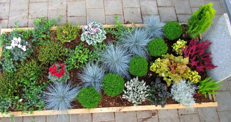 grabbepflanzung bestellen