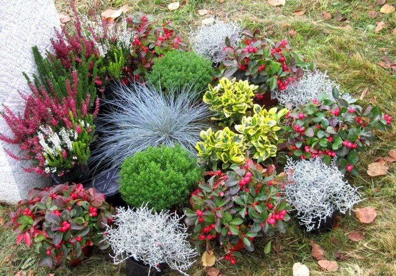 grabbepflanzung toll