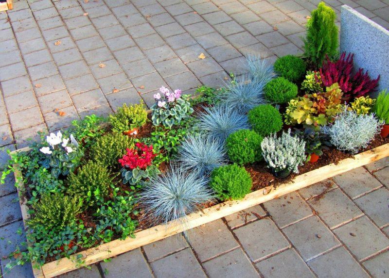 grabbepflanzung passend