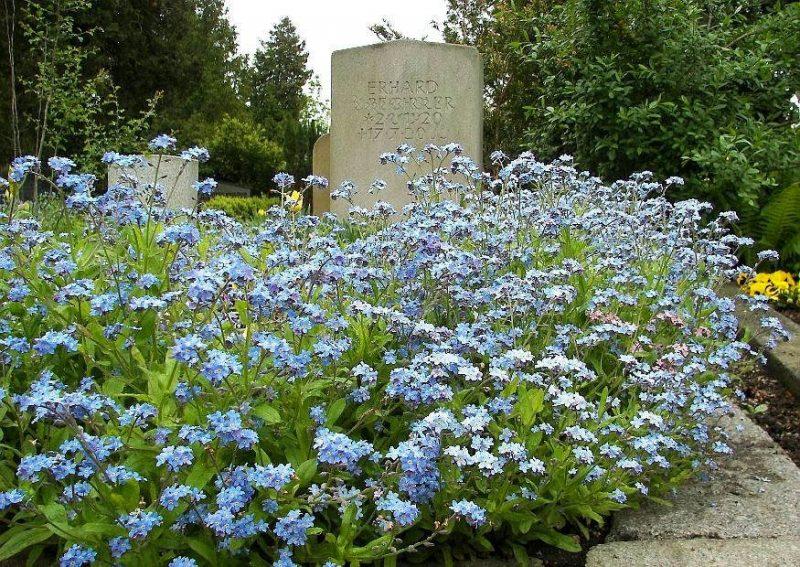 grabbepflanzung blau