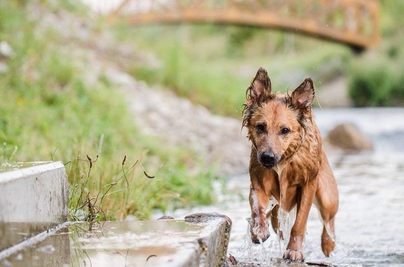 Wenn Harzer Fuchs keine Beschäftigung hat, ist er unglücklich