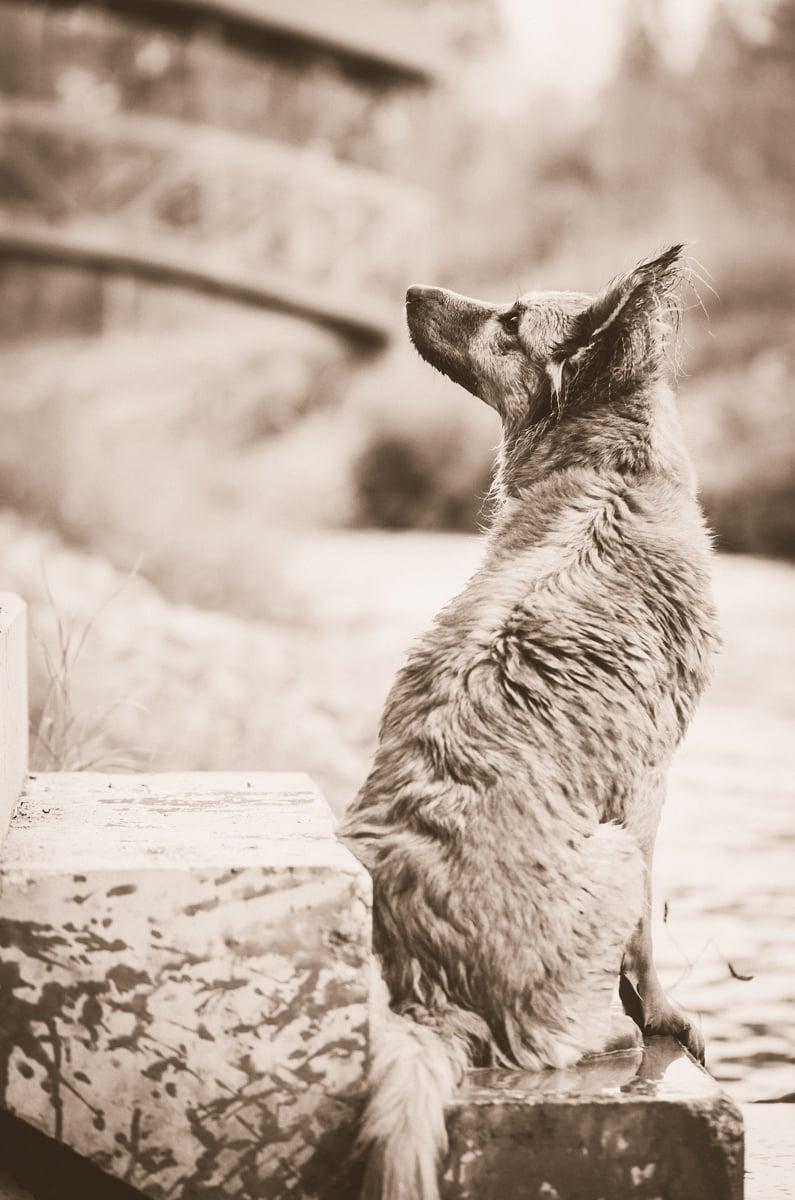 Harzer Fuchs Bilder