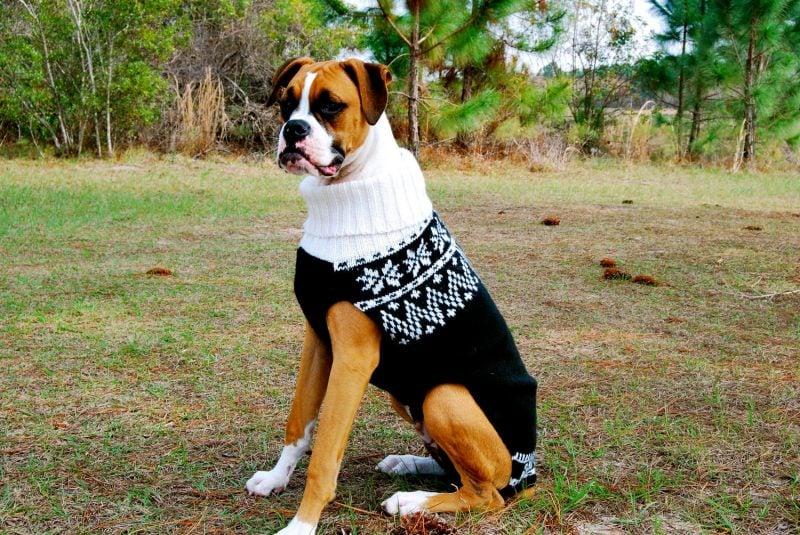 Hundepullover stricken für großen Hund