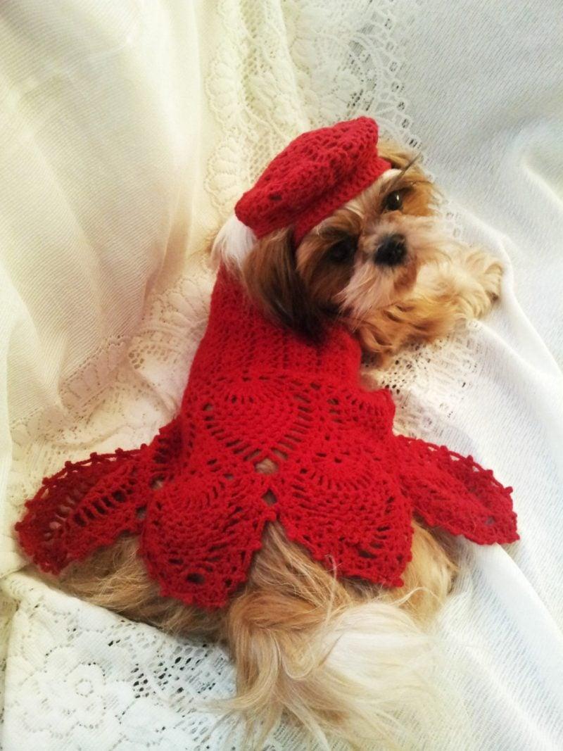 Hundepullover stricken und ein atemberaubendes Kleid machen