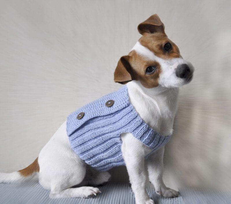 Hundepullover stricken und mit Knöpfen dekorieren