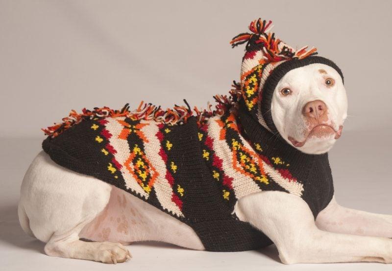 Hundepullover stricken mit unseren Muster
