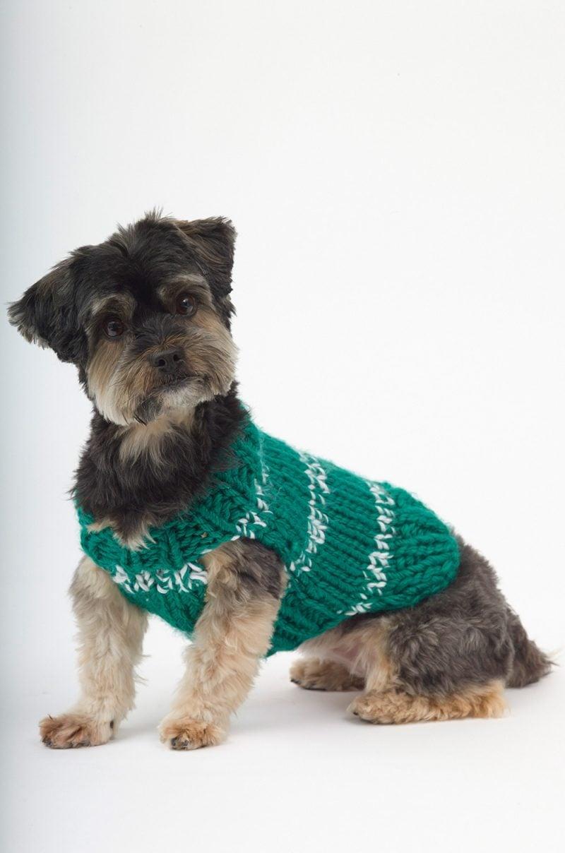 Schützen Sie Ihren Hund vor der Kälte, wenn Sie ein Hundepullover stricken